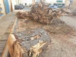 העצים העקורים ברחוב