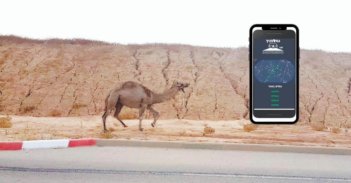 האפליקציה מזהה גמל מתקרב