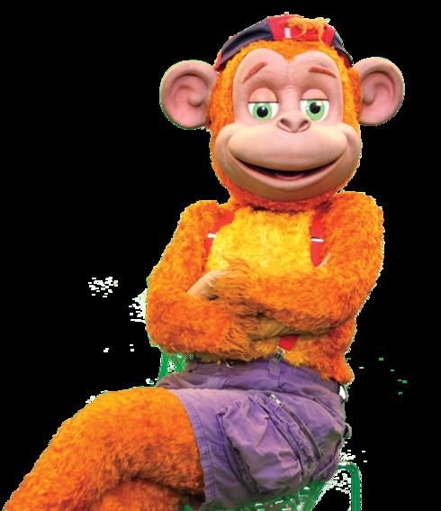 קופיקו. הקוף האהוב במדינה מגיע לבירת הנגב