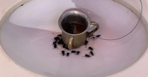 """מכת חיפושיות בעיר הבה""""דים. צילום: אלחנן שושן"""